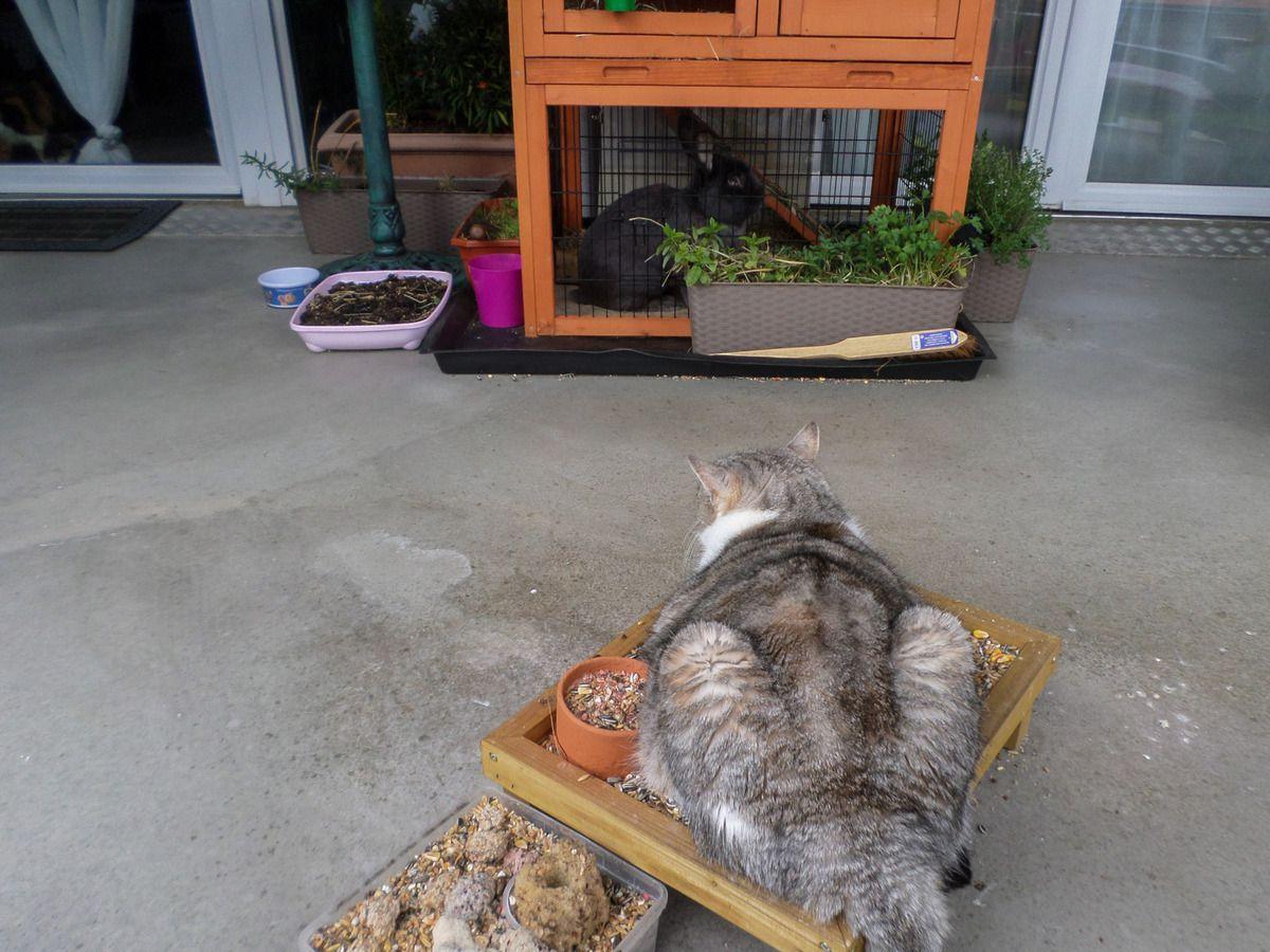 ...et oui un mangeoire à oiseaux peut aussi servir de couchage confortable pour chat !!
