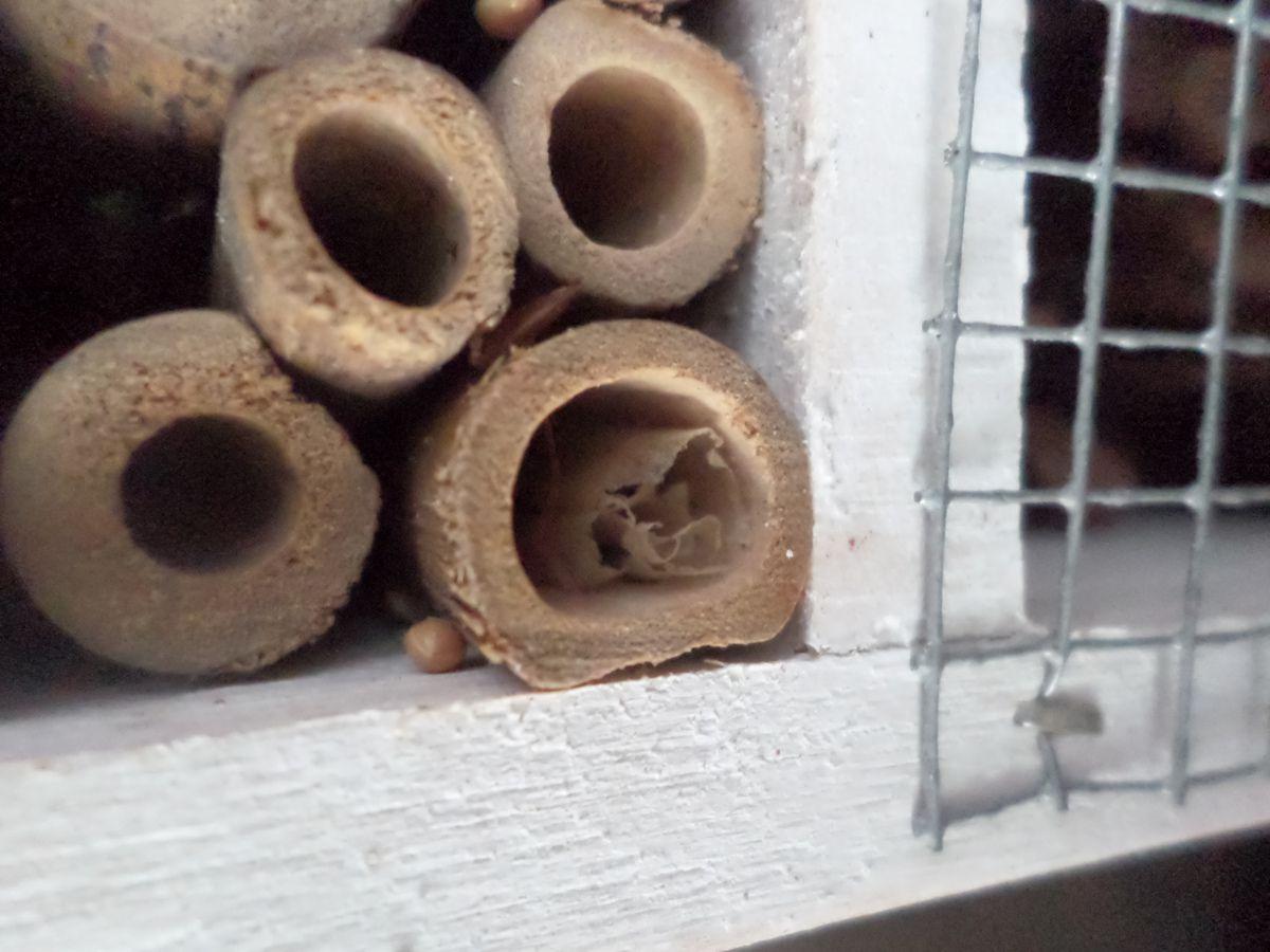 J'ai testé... L'hôtel à insectes