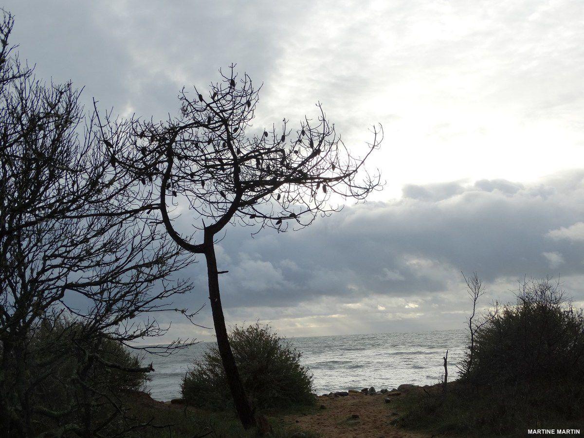 Promenade de décembre en bord de mer à Talmont