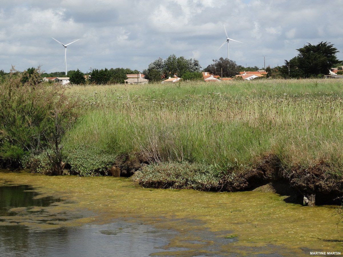 Les marais de l'ïle d'olonne en mai
