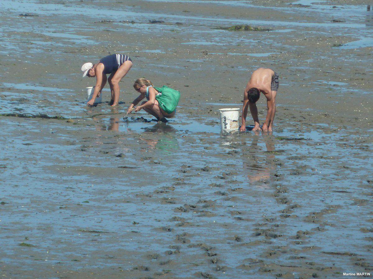La pêche à pieds à Noirmoutier et en Vendée