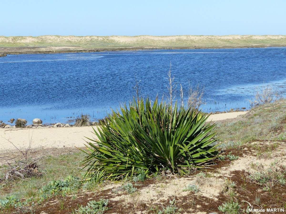 Sentier du littoral la Faute sur mer