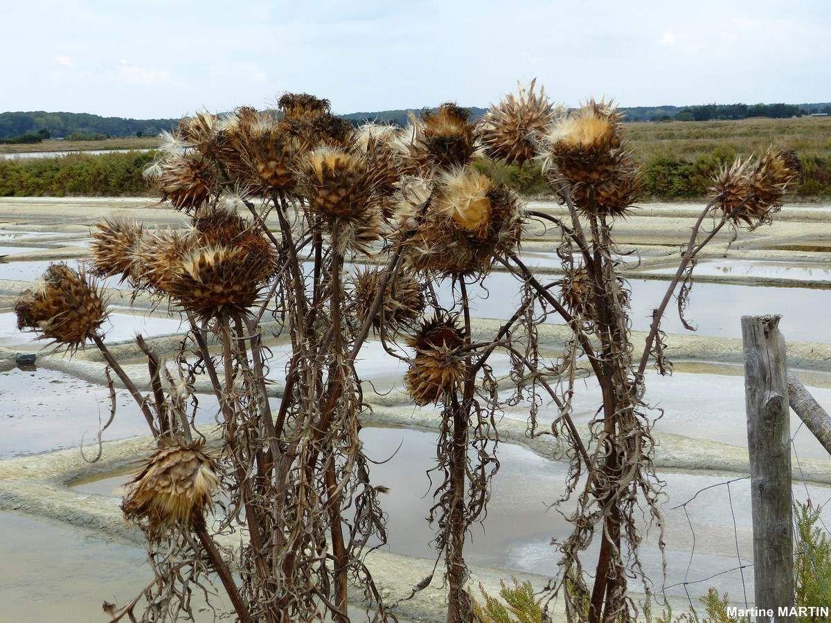 Les marais salants de l'île d'Olonne en Octobre