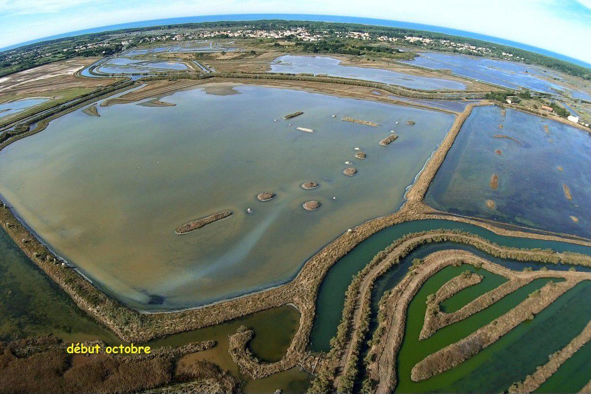 Couleurs du marais de l'ïle d'Olonne (photos aériennes)