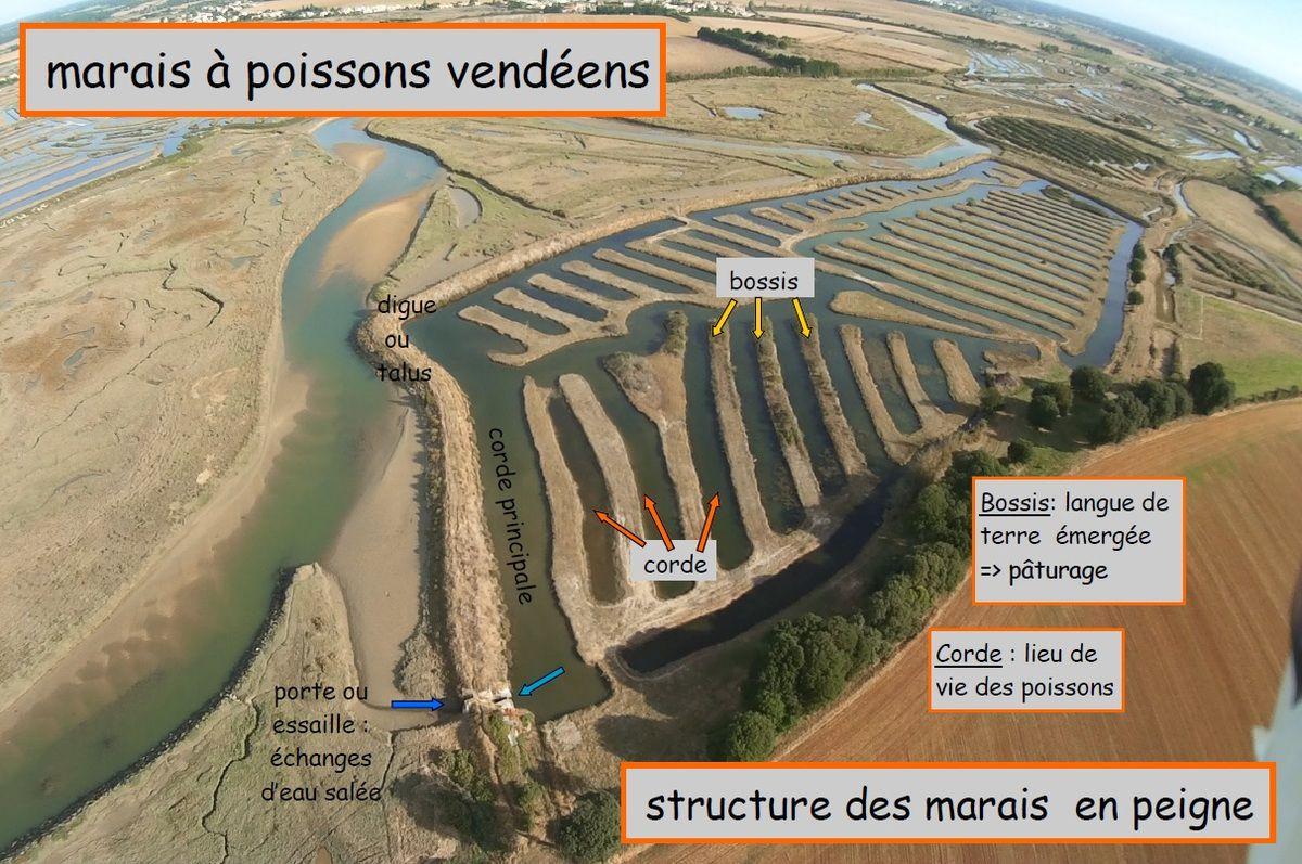 Marais à Poissons / Vocabulaire et informations