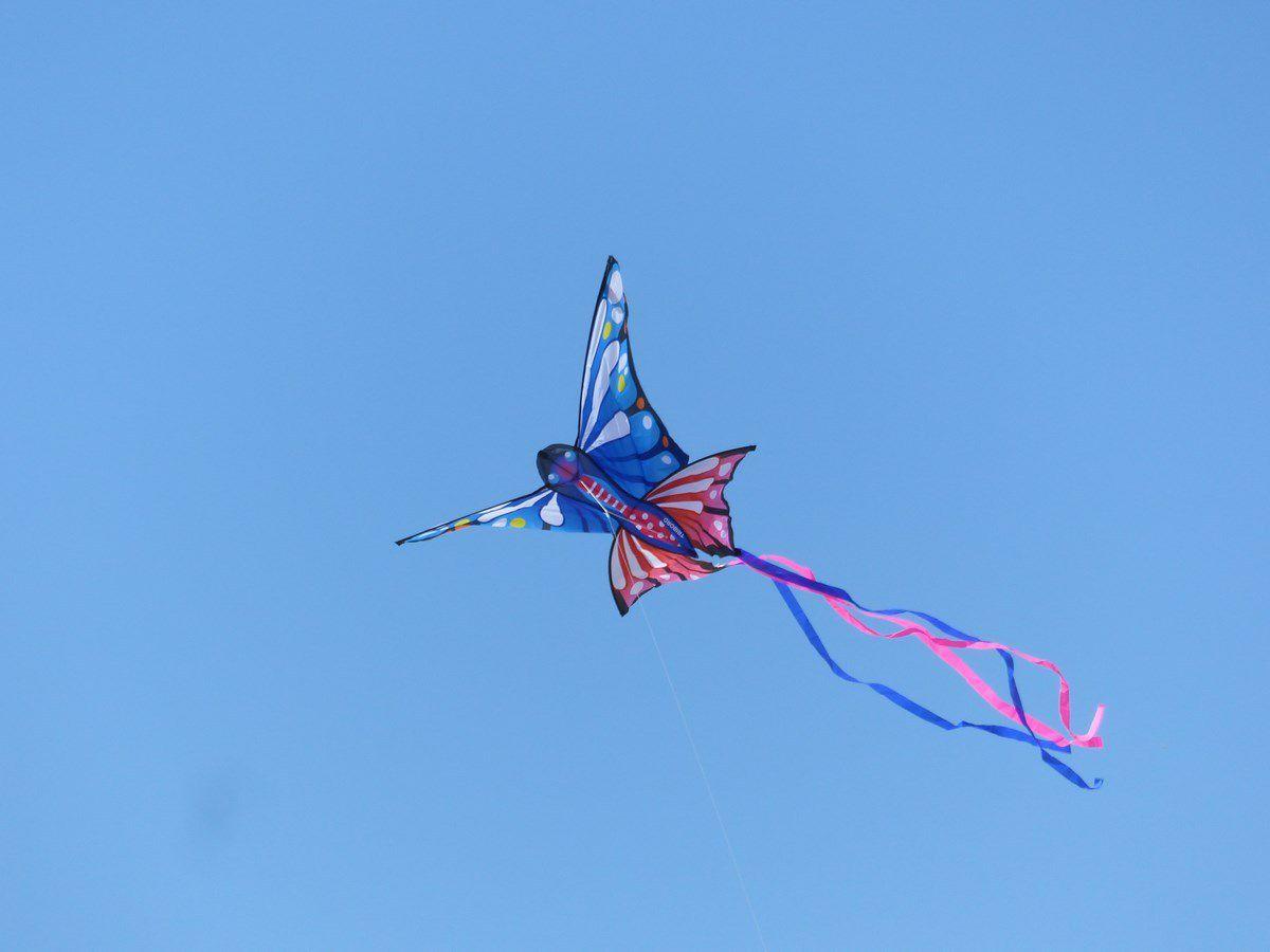 Le vol d'un Papillon au dessus des Sables d'Olonne