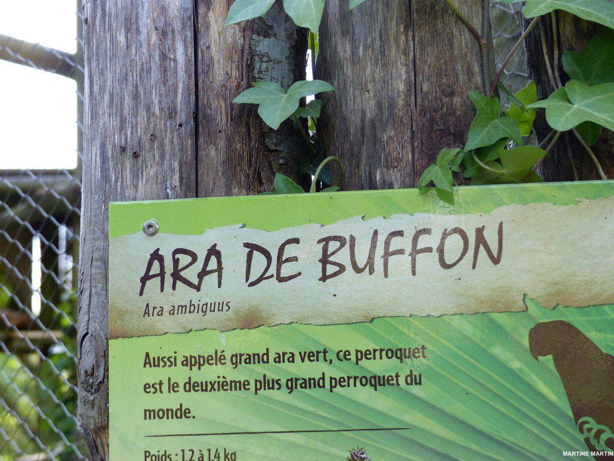 L'Ara de Buffon du zoo des Sables