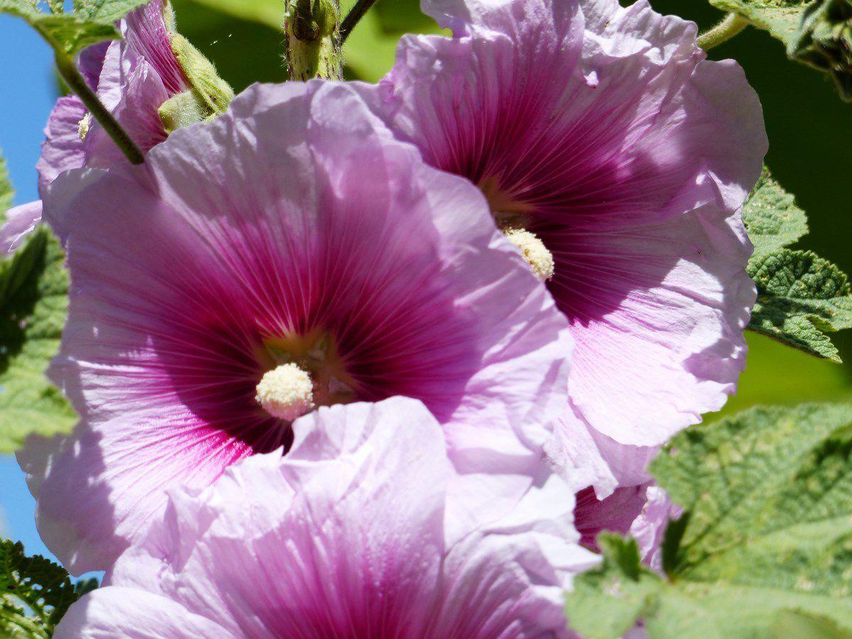 Des fleurs d'un jardin de la Vendée littorale