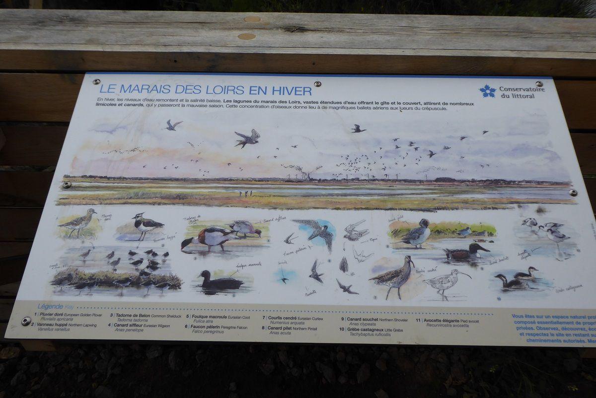 oiseau du marais des loirs en hiver