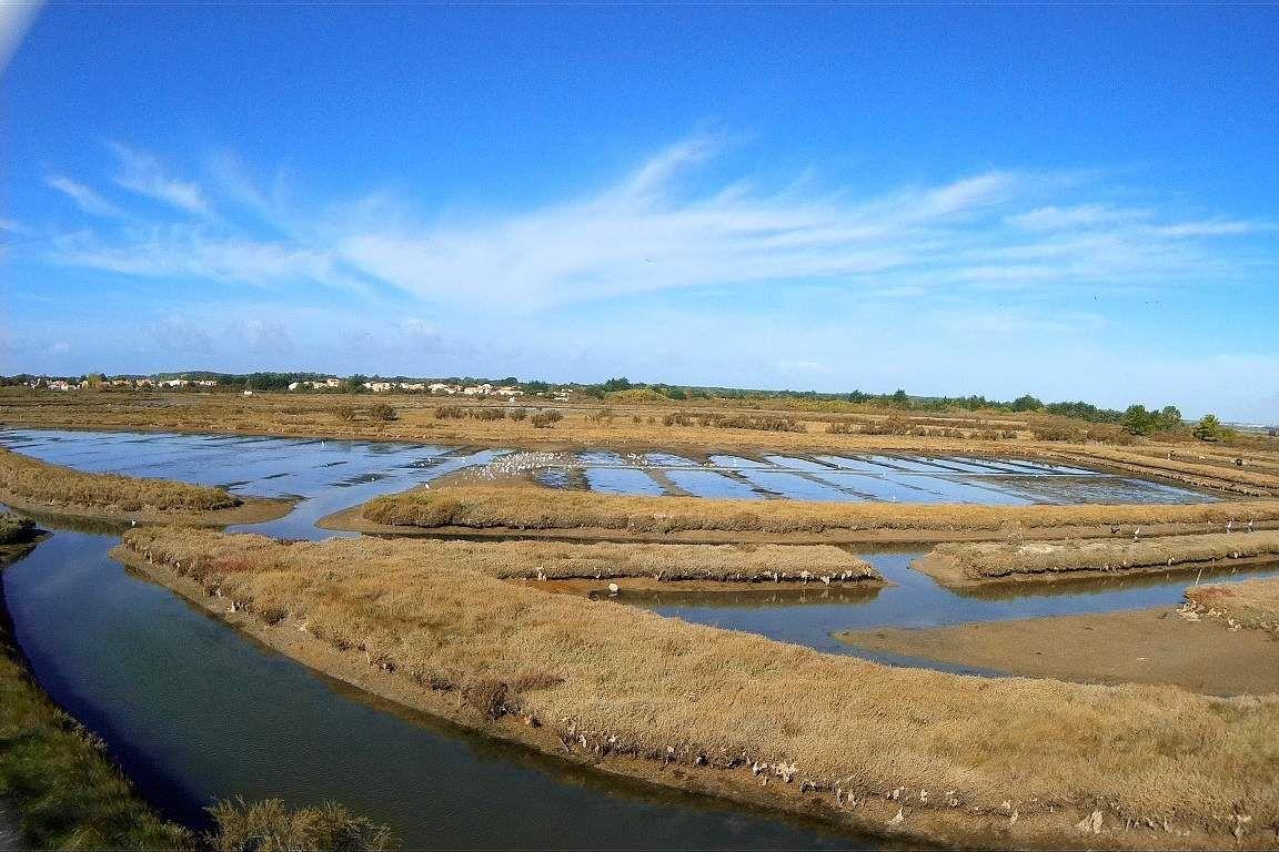 Le marais du loir à Olonne sur mer