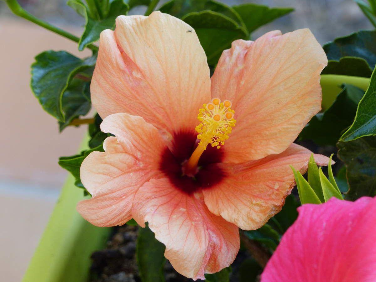 Fleurs d'un jardin de la Vendée littorale