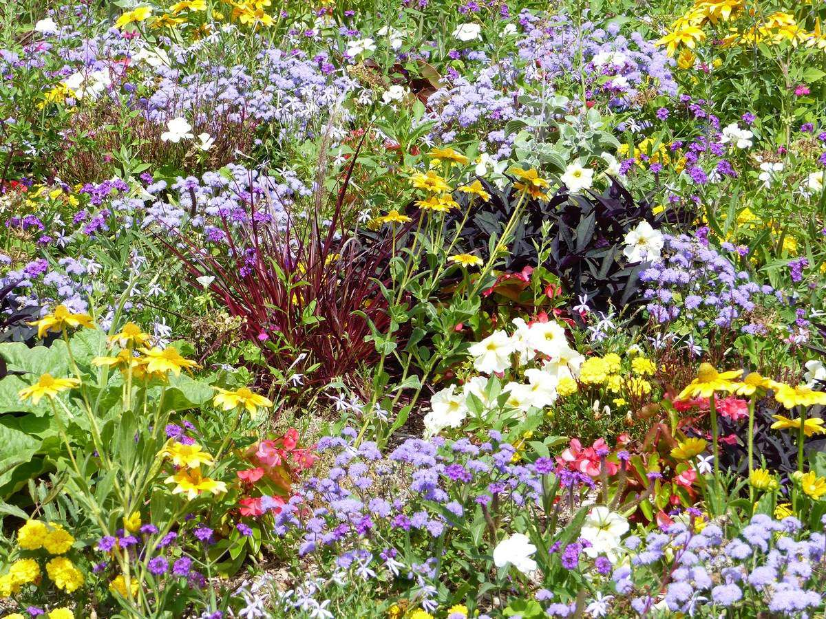 Fleurs devant l'entrée du parc de la Jarrie