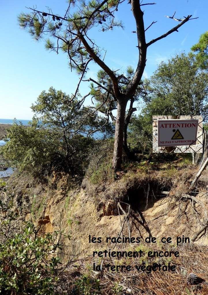 Promenade guidée à Talmont Vendée de la mine à Cayola