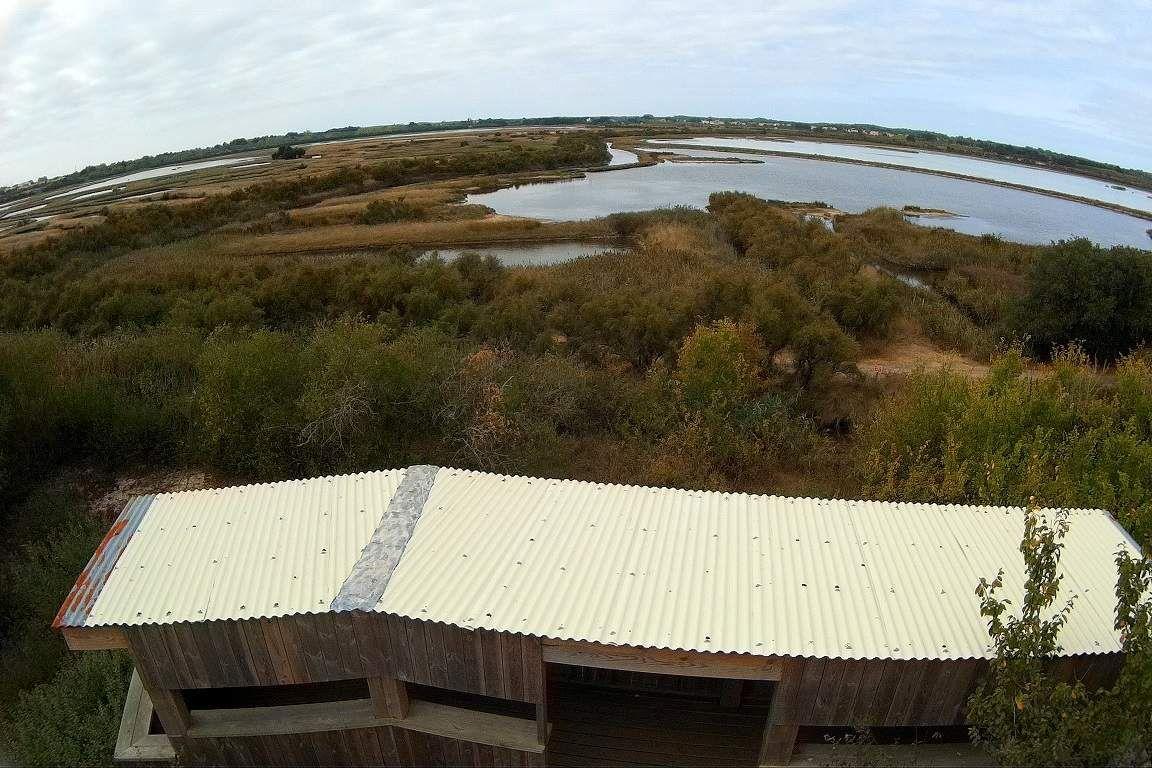 Observatoire des oiseaux de l'Île d'Olonne