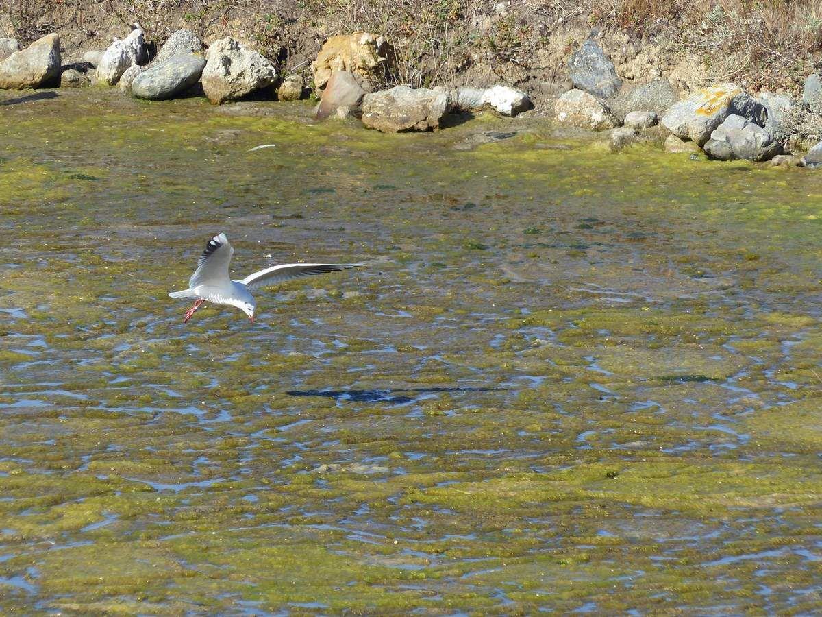 Les oiseaux du marais de Mullembourg en Octobre