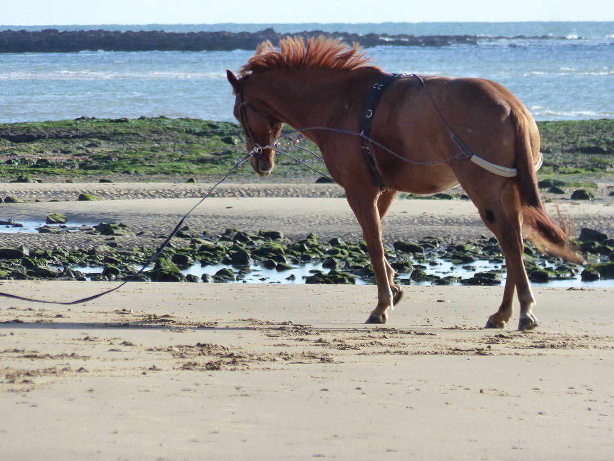 Cheval sur la plage du Veillon