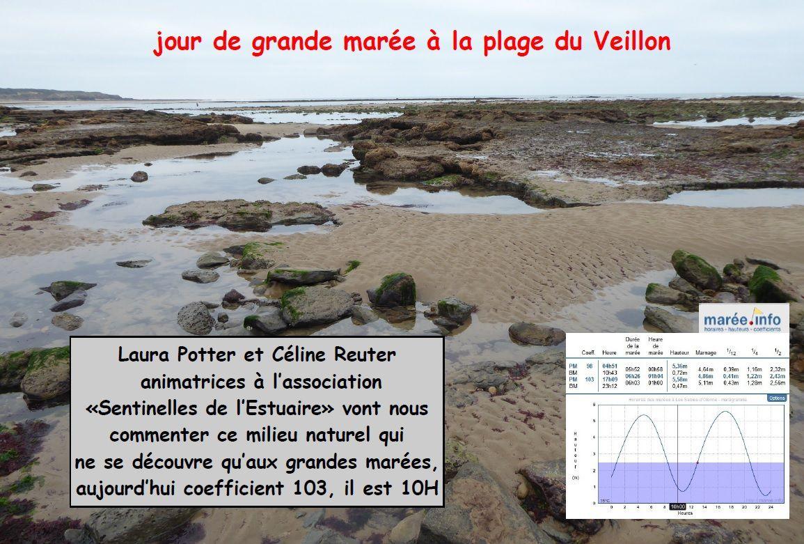 Grande marée au Veillon : Découverte du bas de mer