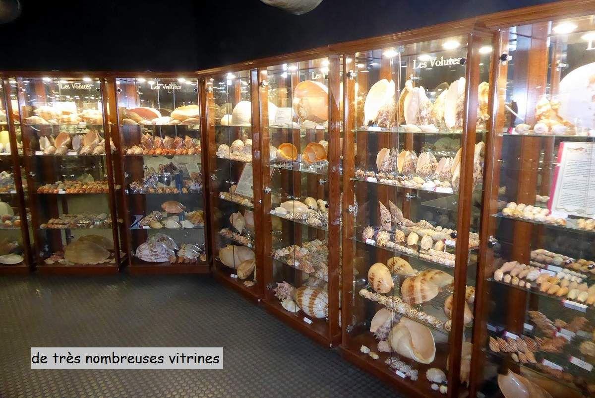 Musée du coquillage aux Sables d'Olonne