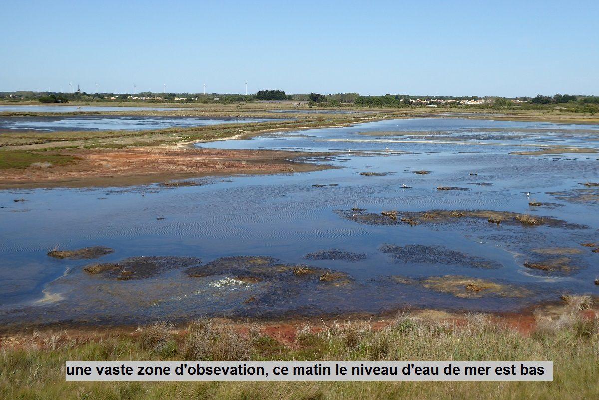 Oiseaux des marais du Loir à Olonne sur Mer