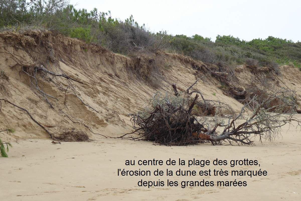 Nettoyage de la plage des grottes à la pointe du Payré