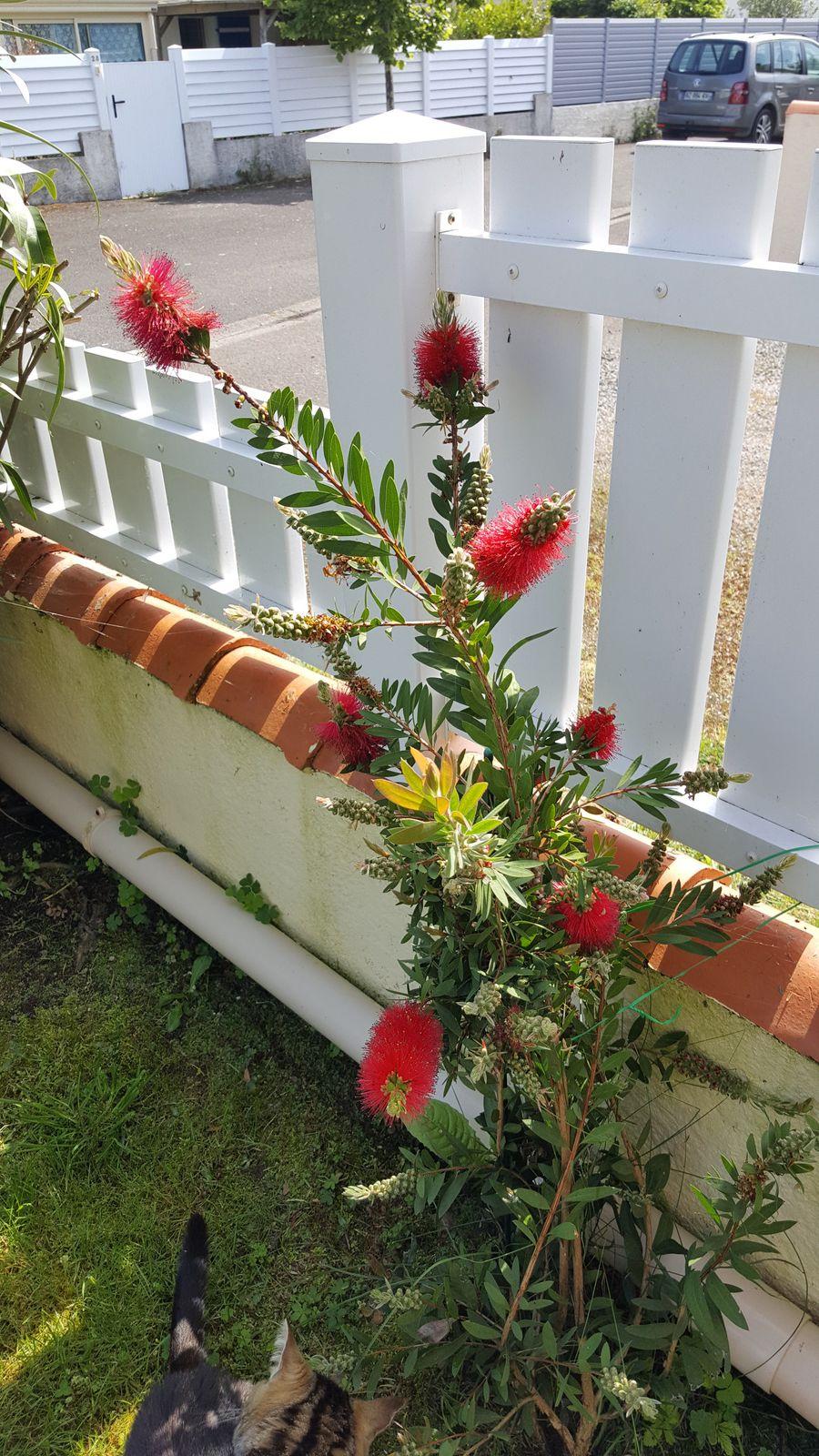 Les fleurs de mon jardin Sablais début mai