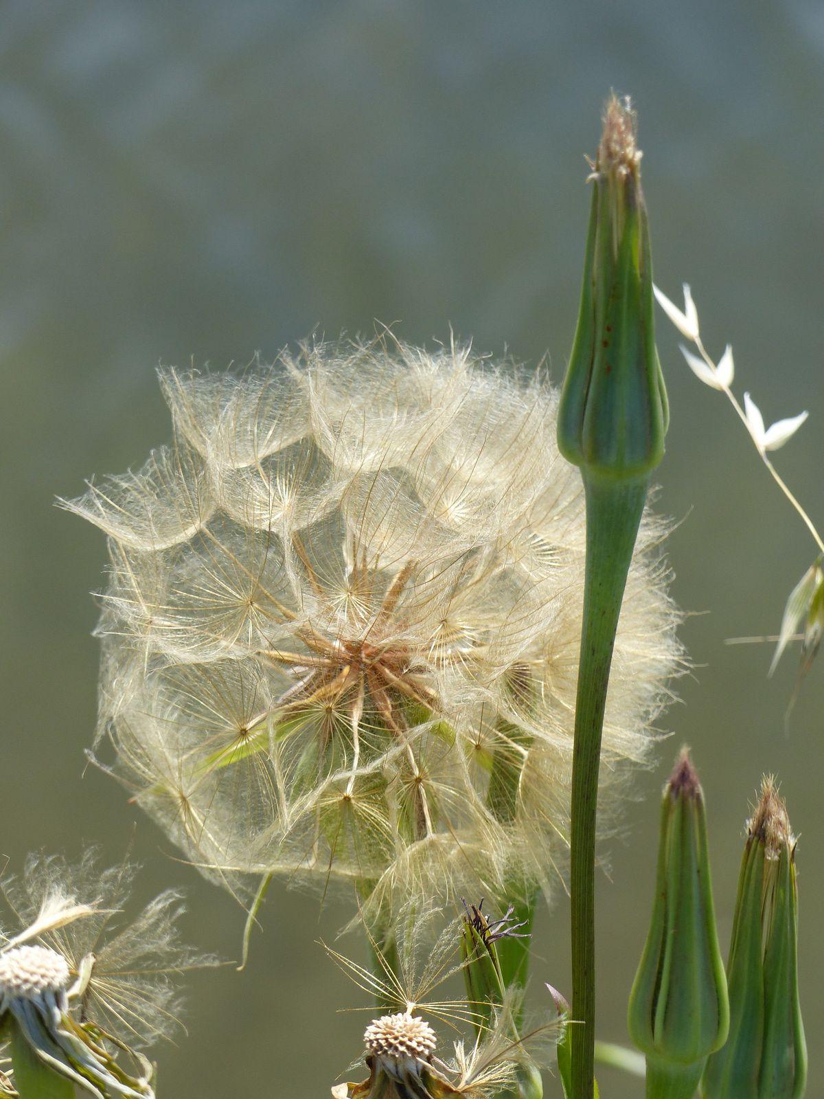 Flore et oiseaux du marais de l'île d'Olonne en été