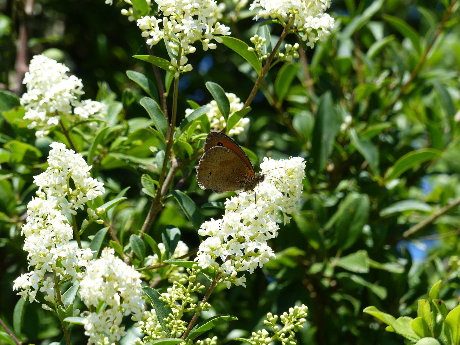 Oiseaux et papillons dans le marais d'Olonne fin mai