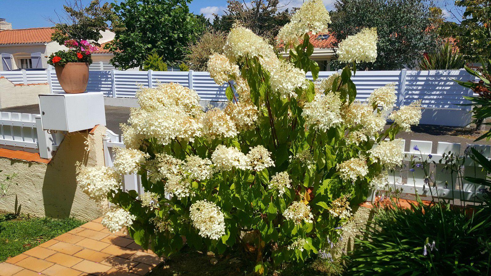 Fleurs d'un jardin Sablais en juillet
