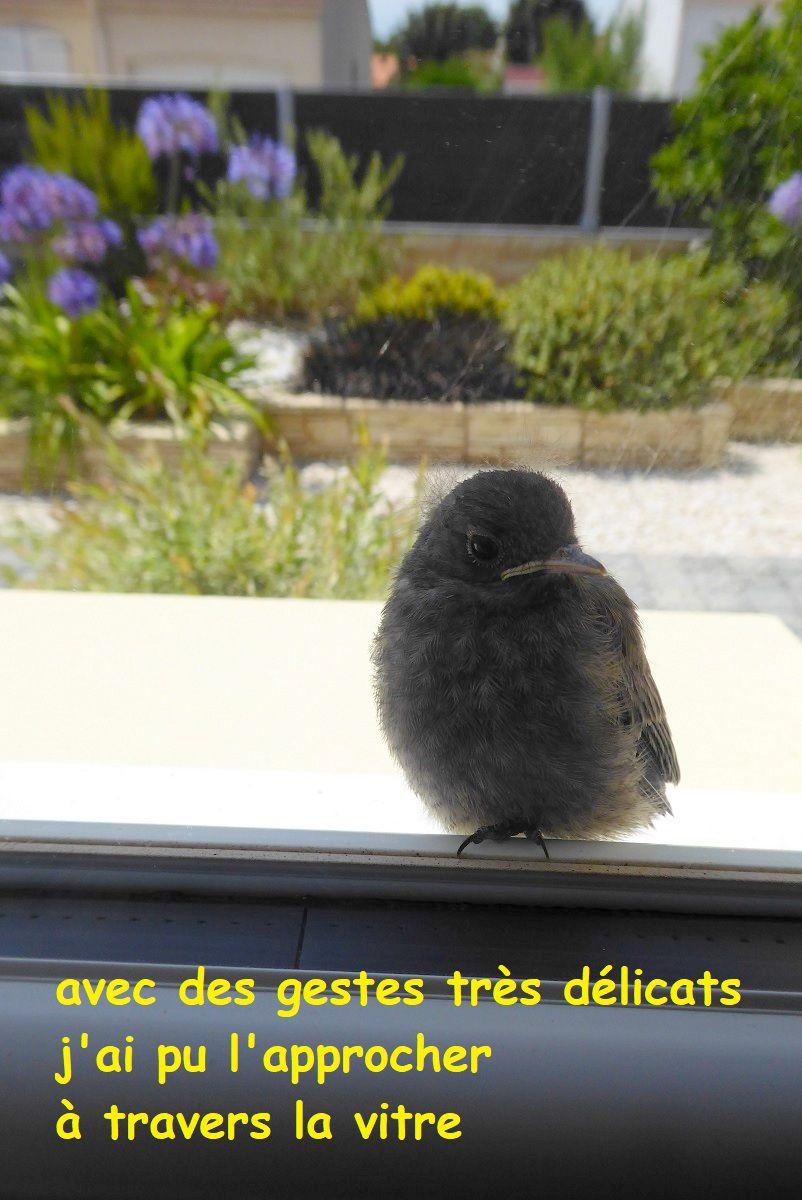 Moineau sur une fenêtre