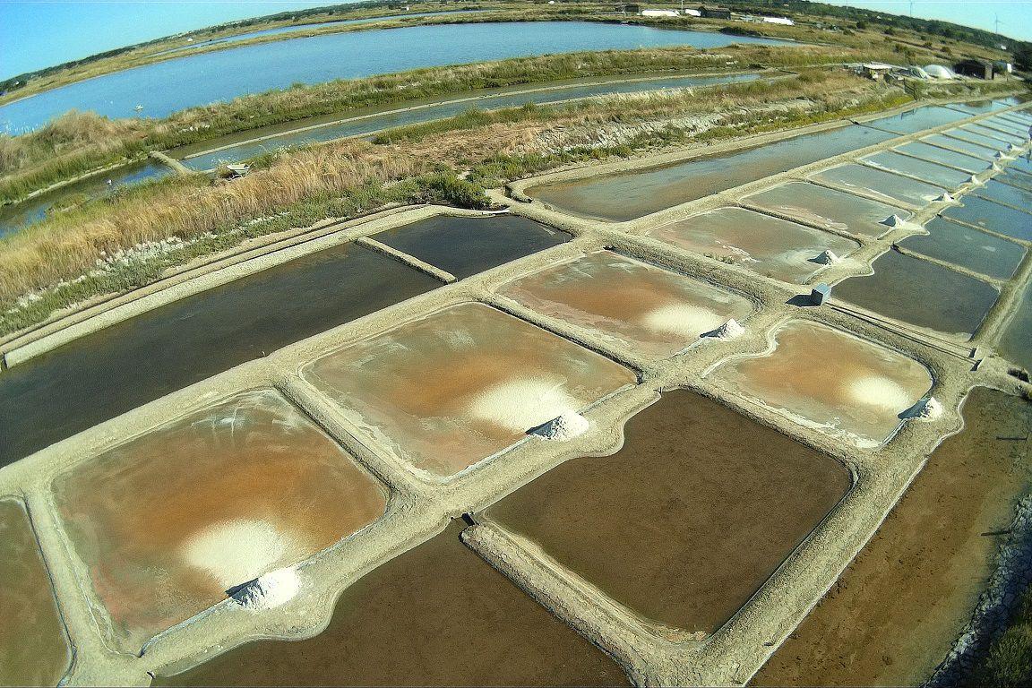 Première récolte de sel dans les marais aux fèves de l'île d'Olonne