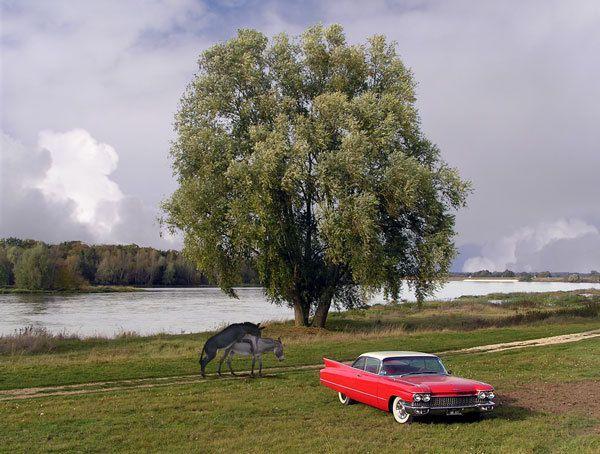 Sur l'Ile de Pré Britenne, la saison des amours prend différentes formes selon les véhicules