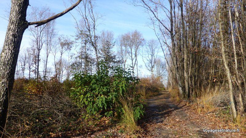 Dans les bois de St-Clair-sur-Galaure