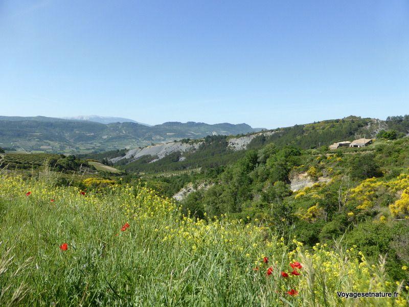 Vallée de l'Ennuye avec vue sur le Mont Ventoux