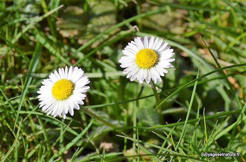 Premiers signes du printemps