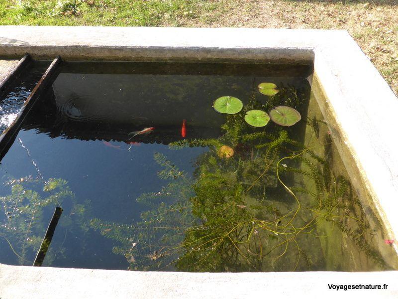 Faune et flore de notre bassin