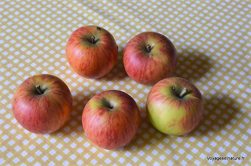 Fruits de l'automne