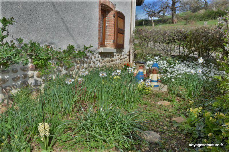 Fleurettes printanières de notre jardin
