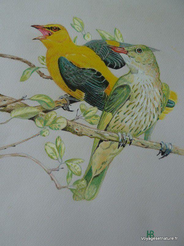 Oiseaux au pastel (2)