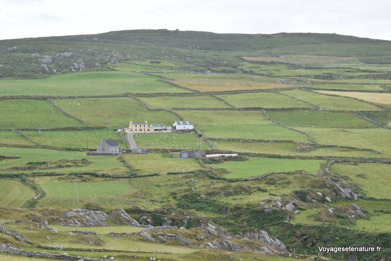Les péninsules de Barea et le Ring of Kerry