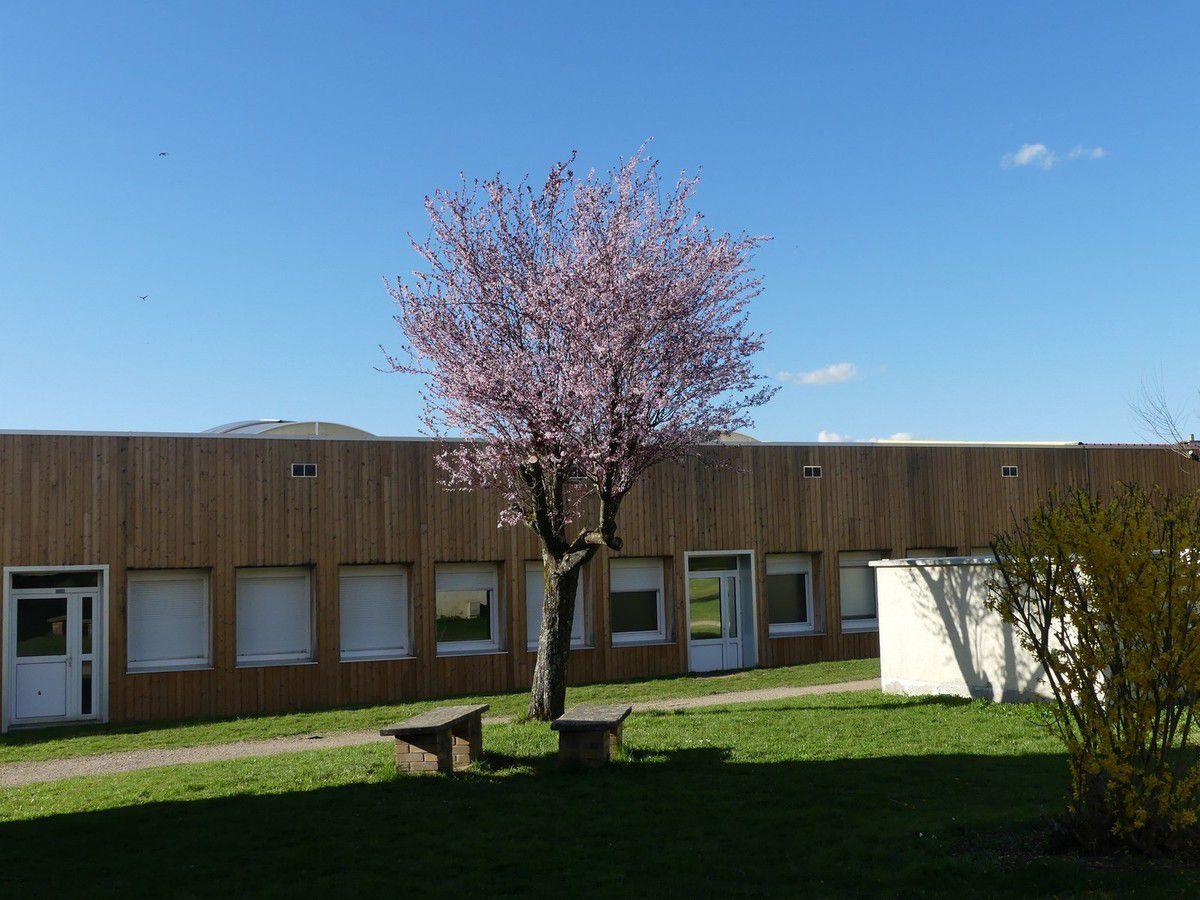 Les élèves ont photographié le printemps