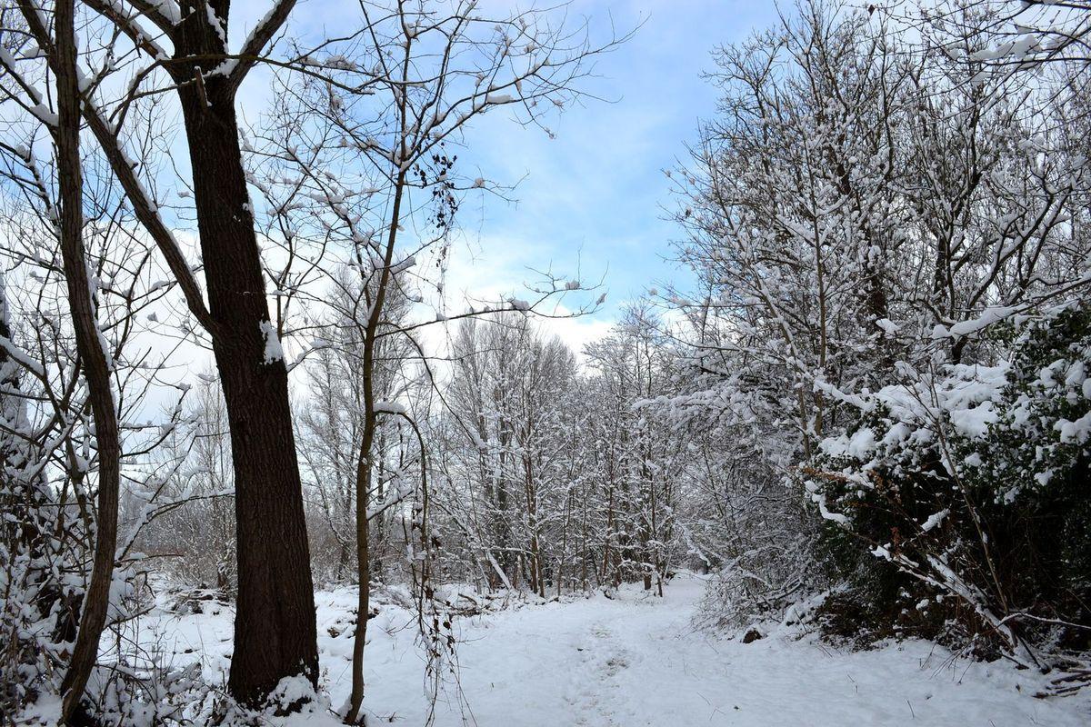 Il y a un an jour pour jour, balade sur les Bords de Loire enneigés...
