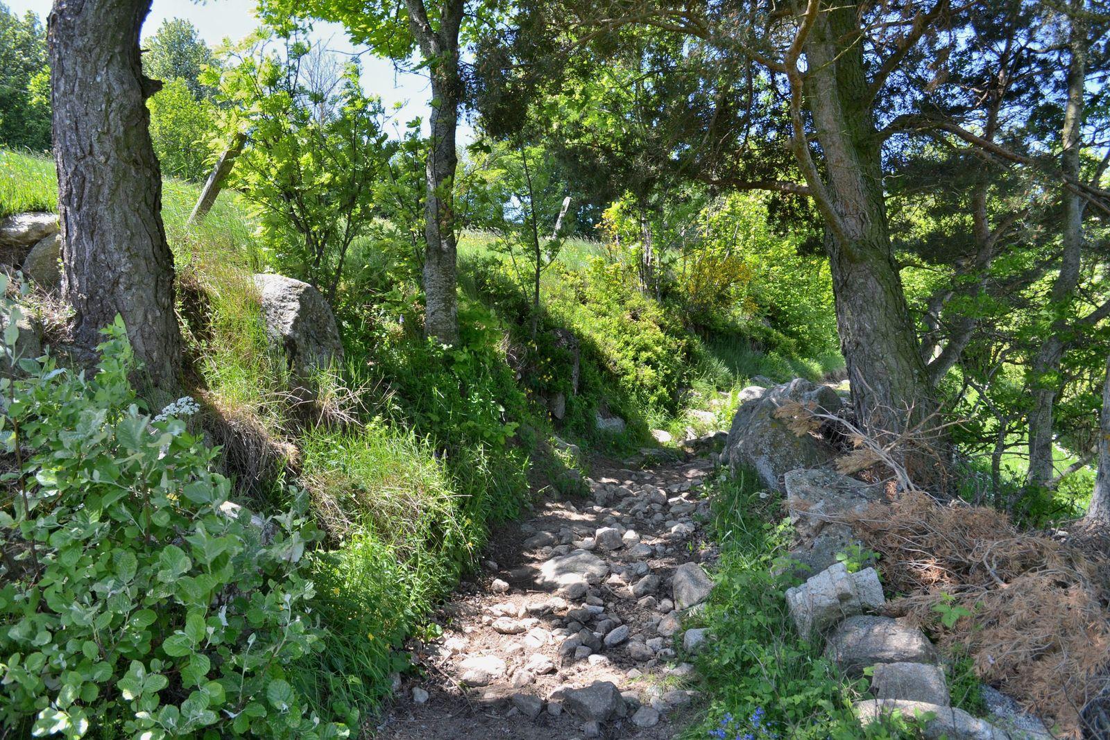 Du hameau de Montchal jusqu'à la croix de La Cartara...