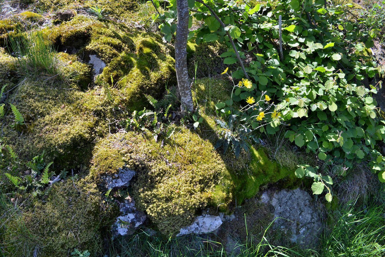 Du hameau de Montpénan jusqu'à celui de Montchal...