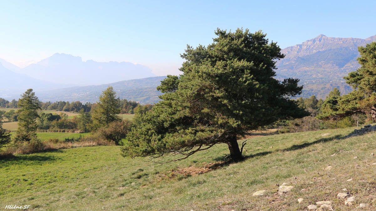 Ancelle jolie randonnée facile pour tous: le Tour de Lachaup