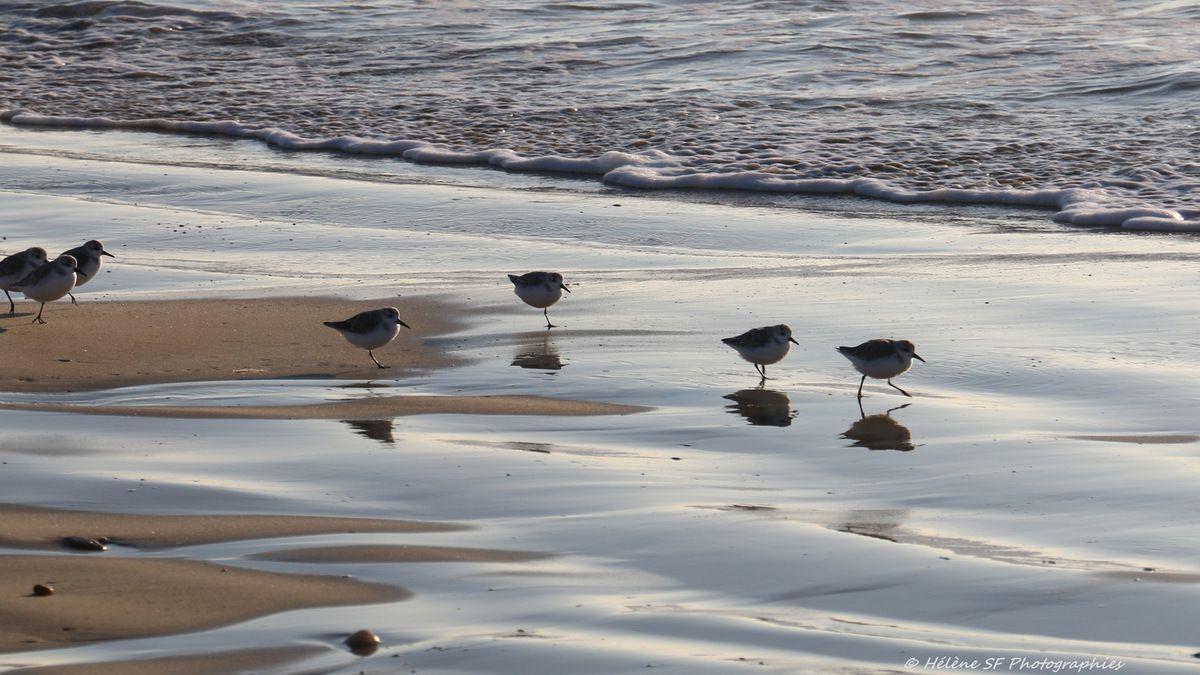 Erdeven: balade d'automne en images sur une plage immense... Photos reposantes, inspirantes...
