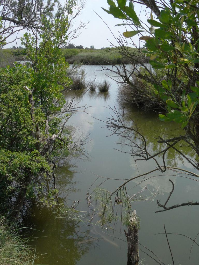 Les marais d'Olonne