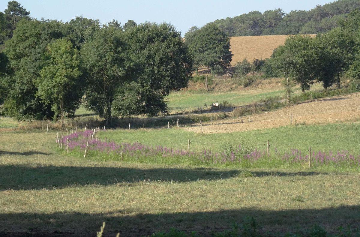 Prairies au soleil du matin