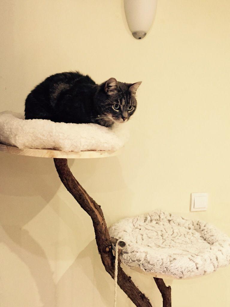 Comment Fabriquer Un Arbre À Chat arbre à chat diy (pour les radins comme moi) - passiparisienne