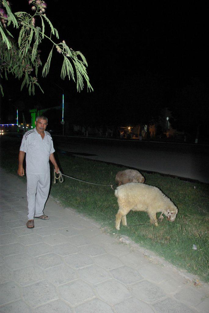 De retous a notre hotel, nous avons fait une rencontre etonnente. Cet homme vient le soir faire brouter son mouton, comme nous en europe promennons notre chien.