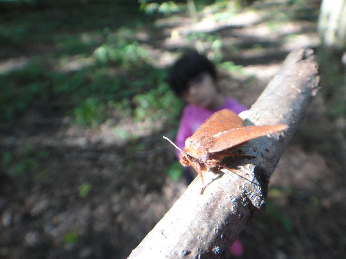 La sortie en forêt